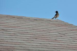 Pic of Shingle Roofing Sulphur Springs TX - Nunez Roofing LLC
